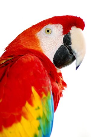 red macaw Stockfoto