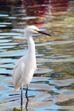 migratory: Migratory Crane Bird Stock Photo