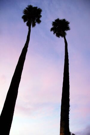 serrated: An isolated shot of Twin Palm Trees at sunset Stock Photo