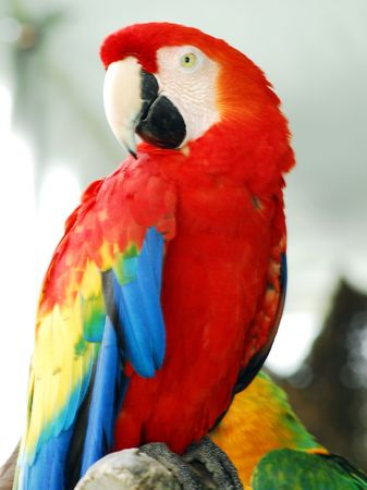 Red Macaw Bird Stockfoto