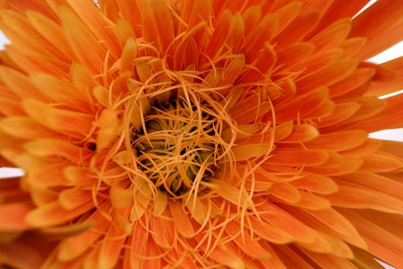 orange marigold Flower Stock Photo - 3638787