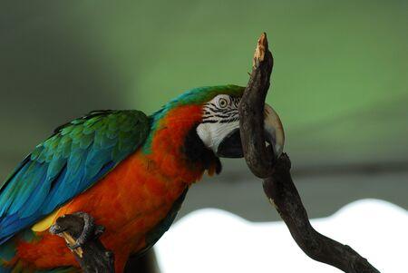 Red Macaw Bird 스톡 콘텐츠
