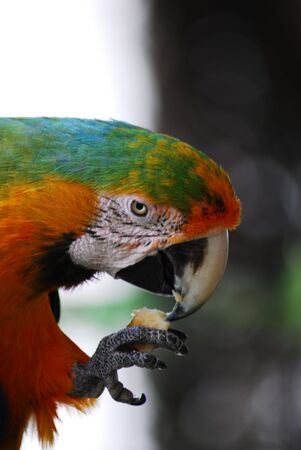 Macaw Bird Green and Yellow Color photo