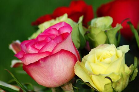 An assortment of rose Flowers of different colors Stock Photo - 3884889