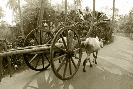 agro: A bullock cart moving on the road