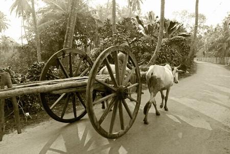 bullock animal: A bullock cart moving on the road