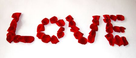 Rose petals valentine love banner photo