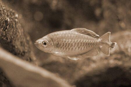 fishy: Fish in Aquarium