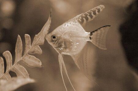 goldy: Alimentazione in Acquario Pesci