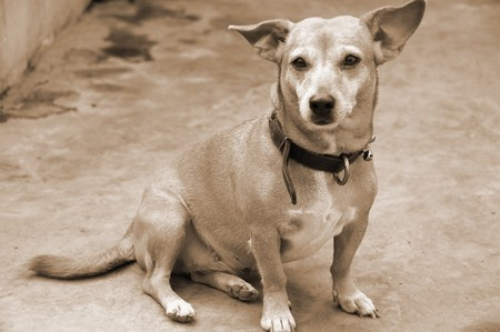 faithfulness: Pet Dog Candid
