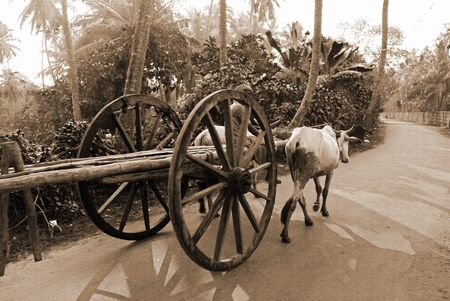cart road: A bullock cart moving on the road