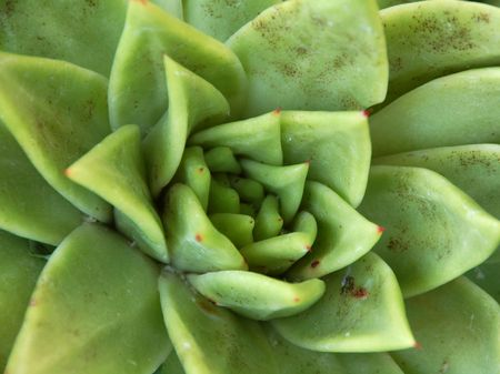 spongy: An isolated shot of a green aloe succulent plant