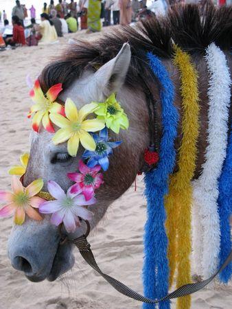 puri: donkey animal decorated for ride to attract tourist on puri beach Odisha India