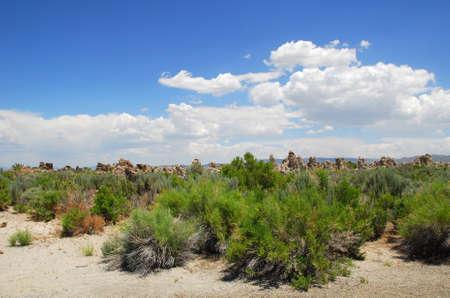 calcium carbonate: Rocce tufas � costituito da depositi di carbonato di calcio Mono Lake California, USA