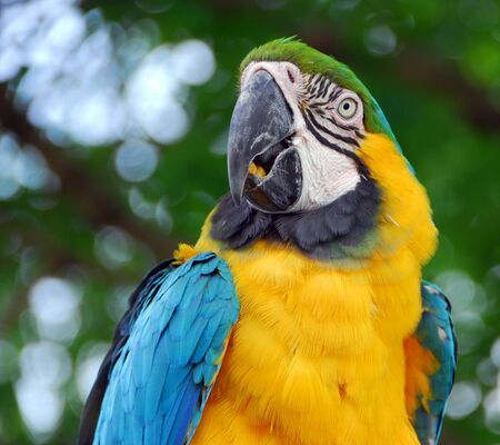 macaw bird with yellow and blue feathers eating food 스톡 콘텐츠
