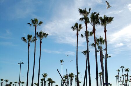 palm trees on ocean front walk at venice beach california photo