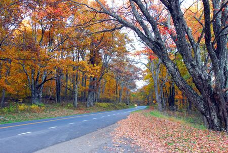 Fall Colors of autumn in Skyline Drive Shenandoah National Park Virginia photo