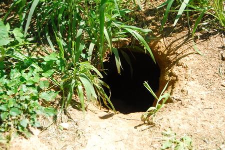 burrow: Rabbit animal hole dug in the ground for hiding