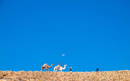 one humped: Camel guide climbs up to Mount Sinai