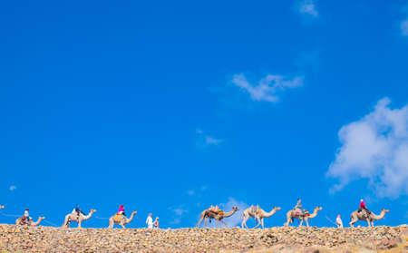 monte sinai: Gu�a de Camel sube hasta el Monte Sina�