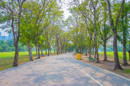 royalty free: Green city park , walkway for exercise Royalty Free Stock Photo