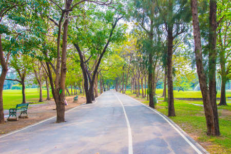 Green city park , walkway for exercise Royalty Free Stock Photo