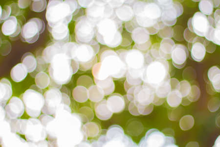 stock image: Tree Bokeh - Stock Image