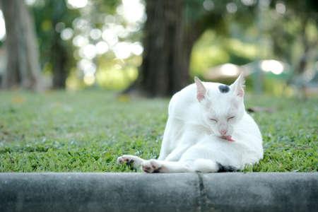 ourdoor: cute cat in ourdoor park Stock Photo