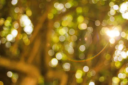 green bokeh blur nature flare light
