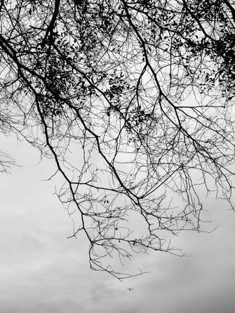 tree silhouette black and white