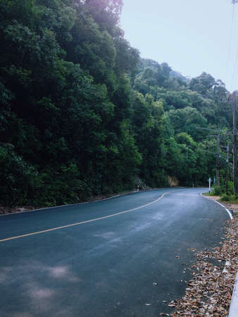Road with trees in Thailand 版權商用圖片