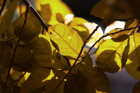 leaves on the autumn forest in morning sun