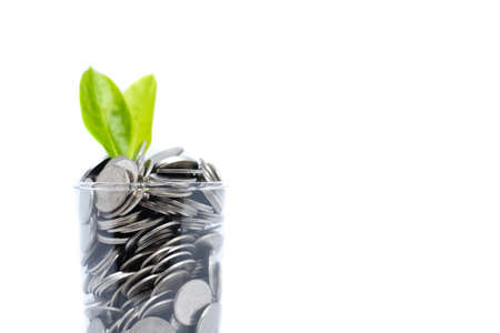 Saving money in glass for your investment future (habit) is similar to growing green leaves on tree isolated on white background - saving & economical concept.