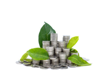 Saving money for your investment future (habit) is similar to growing green leaves on tree isolated on white background - saving & economical concept.