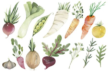 Watercolor painted collection of radish, onion, leek, beans, carrots, tomato, yellow, peas. Hand drawn fresh food design elements isolated on white background. Фото со стока