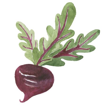 Fresh beet with leaf.  illustration. Isolated white background. Juicy beetroot. vegetable. Organic food. Natural Root. Vegetable Ingredient for food Stock fotó
