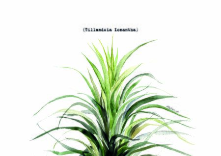 Print summer exotic jungle plant tropical palm leaves. Pattern, seamless floral watercolor. Nature wallpaper. Stok Fotoğraf