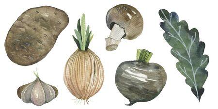 Fresh watercolor vegetables set. Hand drawn watercolor potatoes, onions, mushrooms, beets, radishes, garlic Stok Fotoğraf