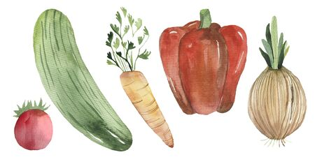 Fresh watercolor vegetables set. Hand drawn watercolor tomato, cucumber, carrot, pepper onion