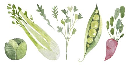 Vegetables set drawn watercolor blots and stains with a peas, celery, radish, radish, cabbage