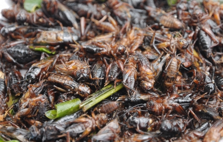 Fried crickets at market in thailand Stock Photo - 22862308