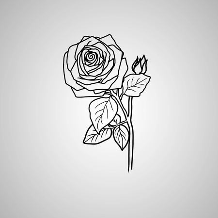 botanics: rose symbols, decorative vector illustration Illustration