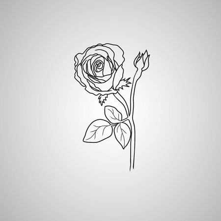 symbol decorative: rose symbol, decorative illustration