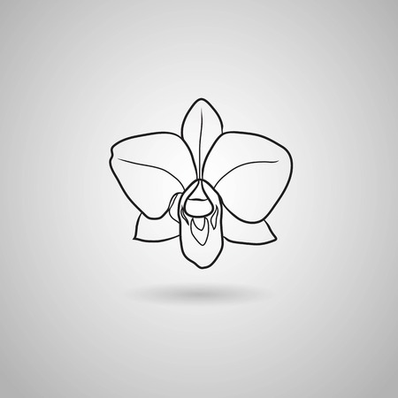 white orchids: orchid flowers  Vector illustration