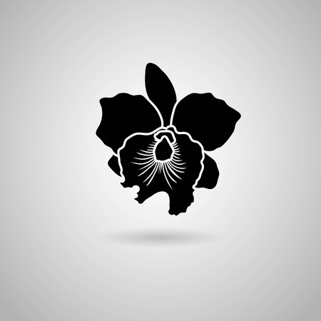 orchid flowers  Vector illustration  Vector