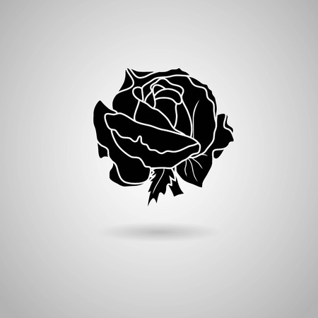 rose  Vector illustration  Vector