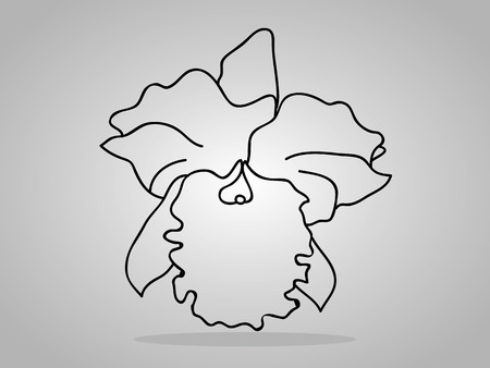 branch to grow up: orchid flowers . Vector illustration.