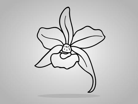 flori culture: orchid flowers . Vector illustration.