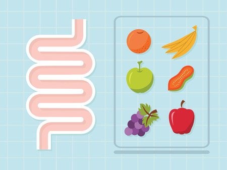 transverse colon: Intestinal vector design ,healthy concept