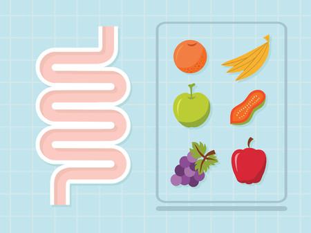 Intestinal vector design ,healthy concept